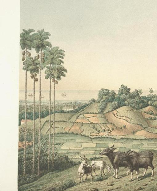 Pastoral Java (drawing)