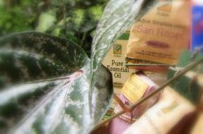 Indonesian essential oils