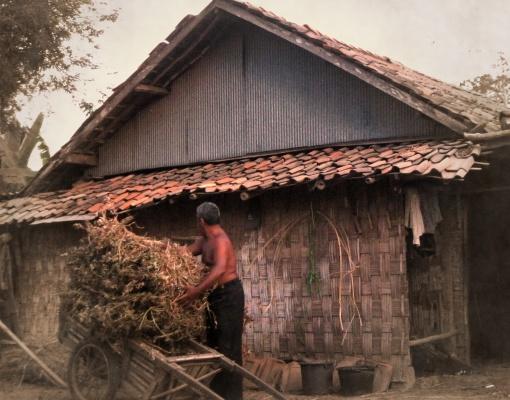 Laki-laki Bangkalan urus makanan sapi